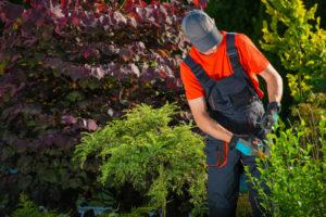 Regelmessig klipping av busker er viktig for å holde hagen ved like