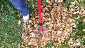 gjør hagen klar for vinteren ved å rake plenen