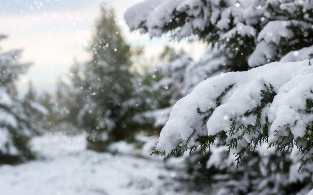 Slik gjør du hagen klar for snø og is