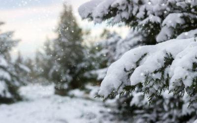 slik gjør du hagen klar for vinteren